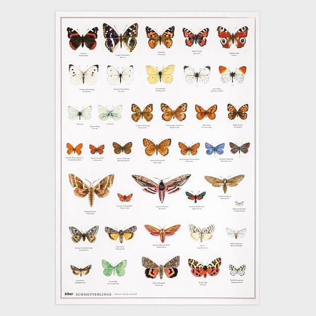 Poster Schmetterlinge, Kunstdruck