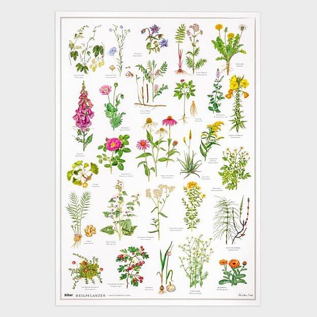 Poster Heilpflanzen, Kunstdruck