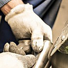 Salzmühle Eiche/Edelstahl mit Keramikmahlwerk